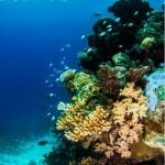 Cairns Best reef cruise