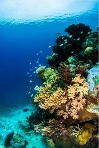 Cairns Best reef cruise